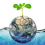 Lonely plant in the parched earth submerged in the ocean Stock Images