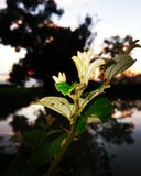 The lonely plant. On a riverbank stock image