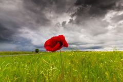 Lonely poppy flower isolated on beautiful sky background Stock Images