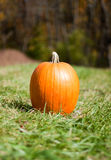 Lonely Pumpkin Stock Image