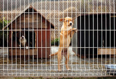 Lonely puppie leaning fence. Lonly abandoned puppy leaning on a fence of a enclosure in a dog shelter. Looking sad Royalty Free Stock Photography
