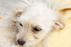 Lonely puppy Royalty Free Stock Photo