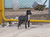 Lonely puppy at the fence looking somewhere. The lonely puppy at the fence looking somewhere royalty free stock images