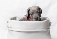 Lonely puppy Stock Image