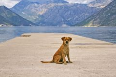A lonely puppy sits on the pier. A lonely puppy sits on a pier against the backdrop of mountains in a Boko-Kotor bay. Montenegro stock image