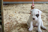 Lonely puppy. Sitting in a pen on the ground, sad puppy royalty free stock photos