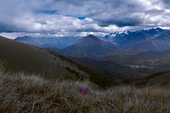 Lonely purple flower with a background of mountains and thunder clouds stock photography