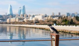 Lonely raven on a pier Royalty Free Stock Photos