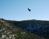 Lonely raven in winter mountains Royalty Free Stock Photo
