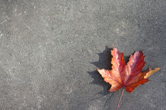 Lonely red leaf on the ground Stock Photos