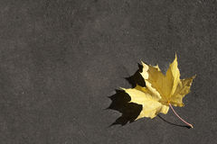 Lonely red leaf on the ground Royalty Free Stock Images