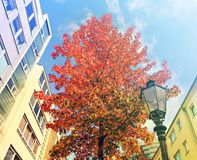 Autumn in the town. Urban fragment Royalty Free Stock Image