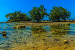 Lonely remote island with rock beach and tree when the sea water Stock Image