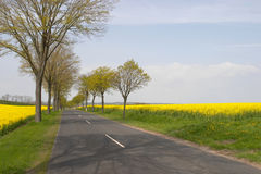 Lonely Road. Driving in between the coleseed Fields, Denmark stock image