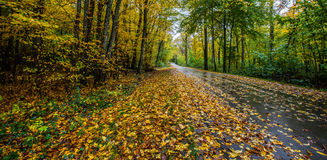 Lonely Road. A road in an autumn forest on a wet and rainy day Royalty Free Stock Photography