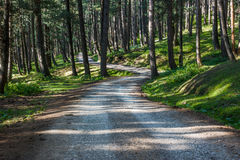 Lonely road through dense pine forest Stock Photography