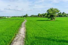 Lonely road in field Stock Images