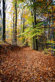 A lonely road in the forest. A lonely road in the autumn forest Royalty Free Stock Images