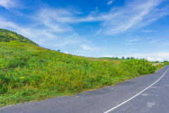The lonely road through the green field Royalty Free Stock Photography