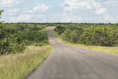 Lonely road inside Kruger Nationalpark, South Africa Stock Images