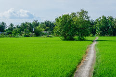 Lonely road in the large field Royalty Free Stock Image