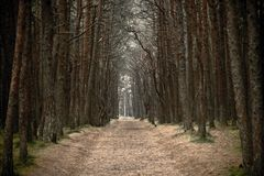 Lonely road in the misty autumn forest stock images