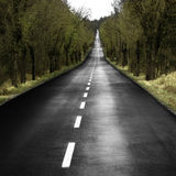 Lonely road. Lonely paved road through a romantic forest Stock Image