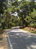 Lonely road with trees around. Green royalty free stock image