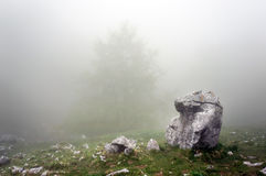 Lonely rock in forest Royalty Free Stock Image