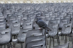 Lonely rock pigeon bird perching on disk outdoor Royalty Free Stock Images