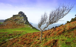 Lonely Rock Tree Stock Photography