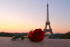 Lonely Rose at Dawn in Paris Stock Photos