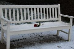 Lonely rose on a snowy bench royalty free stock images