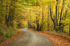 Lonely rural road with fall colors. Rural road in upstate NY with fall colors and leaves on side of the road stock photography