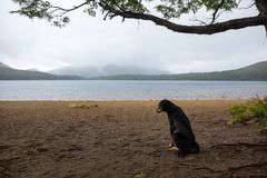 Lonely and sad dog waiting for his master Royalty Free Stock Photos
