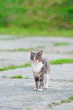 Lonely, Sad, Homeless Cute Tabby Gray Cat Royalty Free Stock Photography