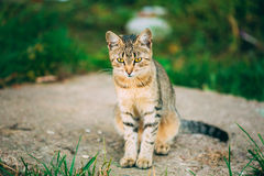 Lonely, Sad, Homeless Cute Tabby Gray Cat Kitten Pussycat. Sitting In Grass Outdoor Summer Evening stock images