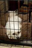 Lonely Sad Pet Dog in Animal Travel Kennel Cage. Lonely and sad white pet dog being kept inside a dog kennel cage. The animal is not happy for being restrained Royalty Free Stock Photos