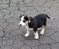Lonely sad puppy. On cracked ground. Homeless animals stock images
