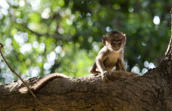 A lonely and scared infant monkey Stock Image