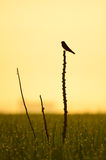 Lonely scenery. And lonely bird Royalty Free Stock Photography