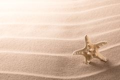 Lonely sea star fish or starfish on beach sand royalty free stock images