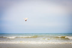 Lonely seagull flying over the ocean in Maine, USA. On a beautiful day Royalty Free Stock Photo