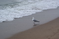 A lonely seagull near the sea Stock Photo