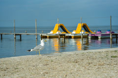Lonely seagull on the shore of the black sea royalty free stock photo