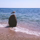 Lonely seagull on the stone at beach Royalty Free Stock Photos