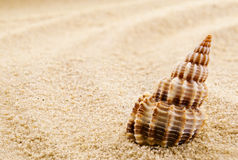 Lonely seashell. Stock Image