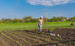 Lonely senior woman planting tomato seedling in spring garden Royalty Free Stock Image