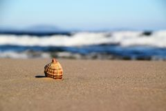 The lonely shell Royalty Free Stock Photo