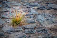 Lonely shrub Stock Images